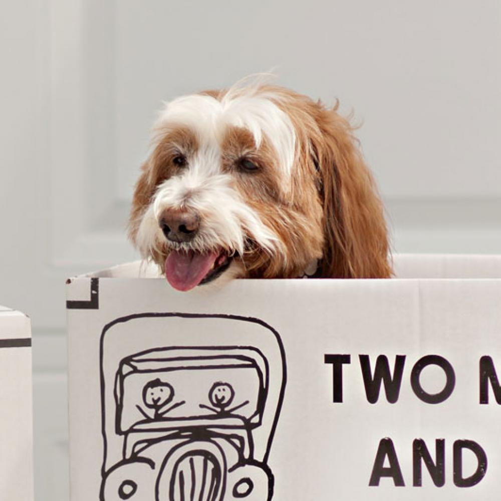 a dog in a two men in a truck moving box