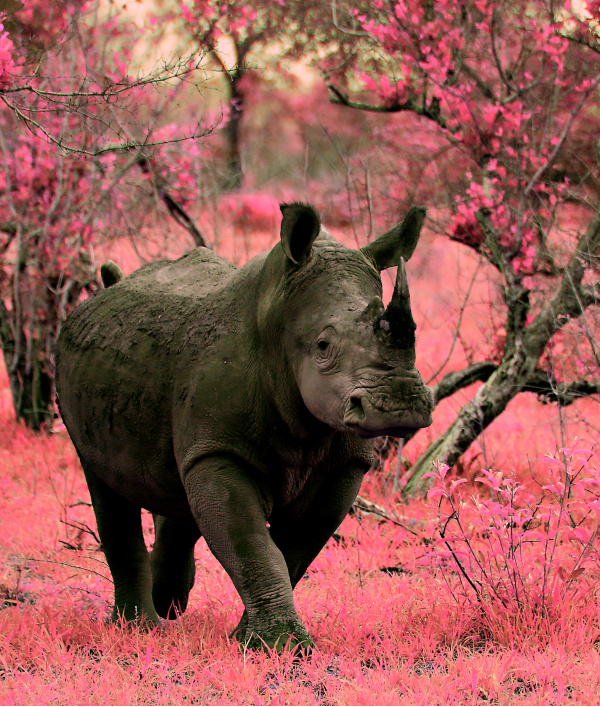 win-wildlife-photography-32361.png