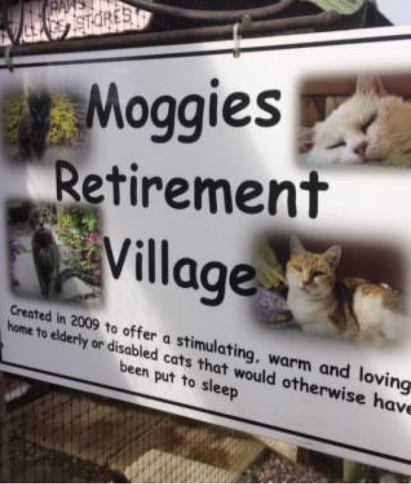 support-elderly-cats-at-the-shropshire-cat-rescue-retirement-village-36428.png