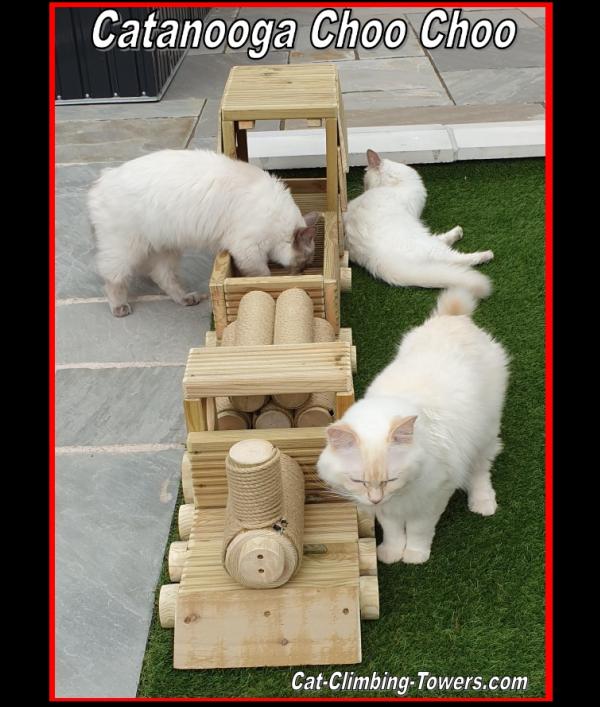 siamese-cat-welfare-trust-23312.png