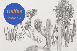 Plant Time: Slow Drawing | The Royal Drawing School