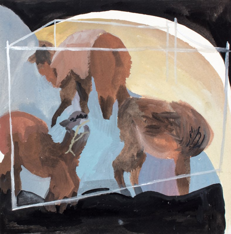 Llamas<span>Copyright Alexander Gilmour</span>