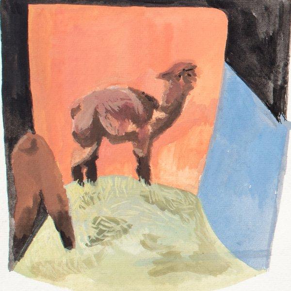Llama Study