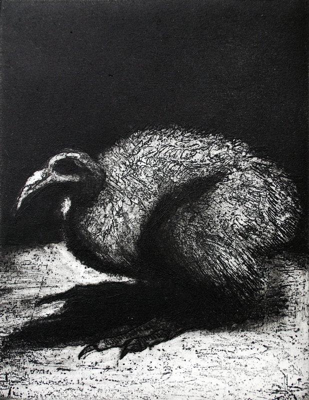 Andean Condor<span>Copyright Sam Marshall</span>