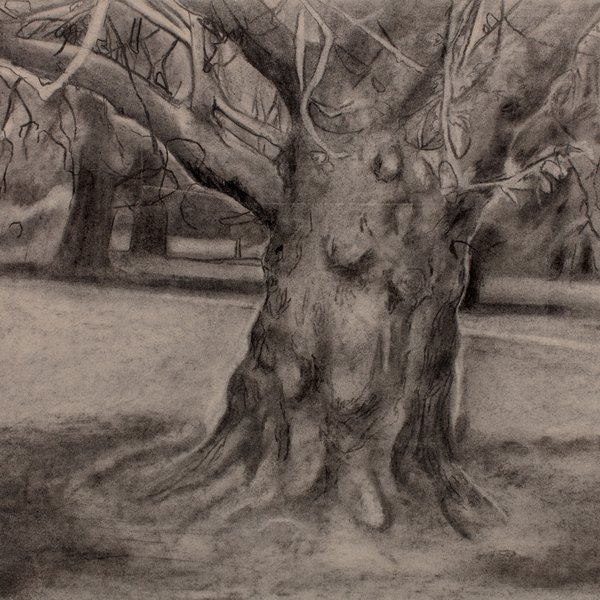 Tree in Kensington Garden