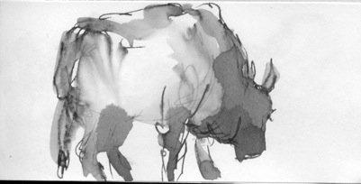 Bull<span>Copyright Maggie Jennings</span>