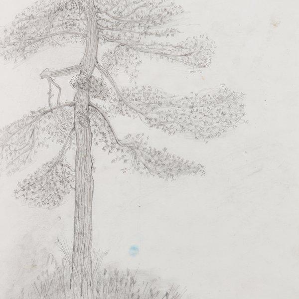 Tree at Kew Gardens