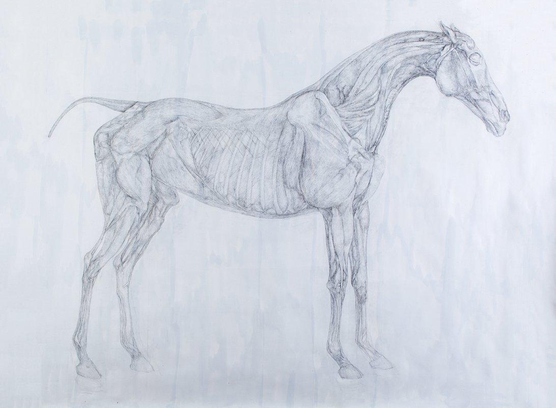 Horse Study 1<span>Copyright Clara Drummond</span>