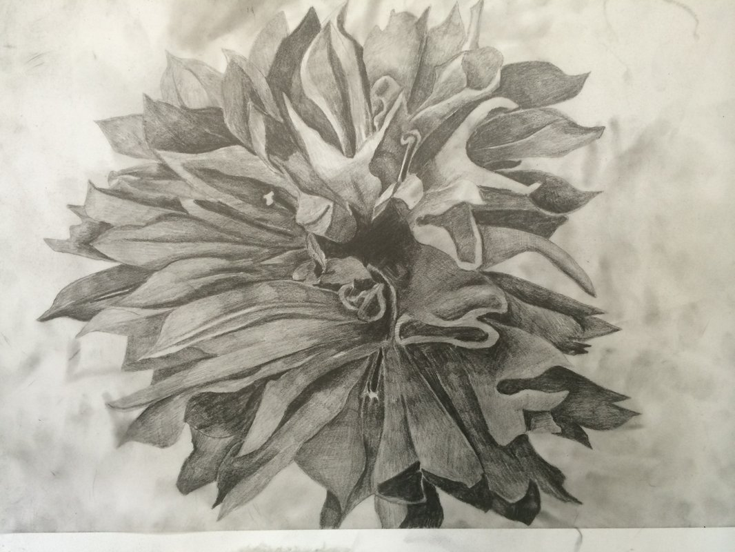 Cornflower<span>Copyright Endellion Lycett-Green</span>