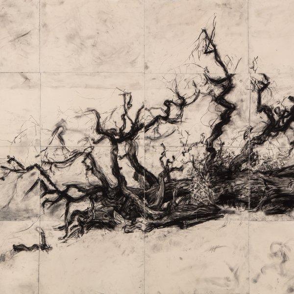 Fallen Tree, Hampstead Heath