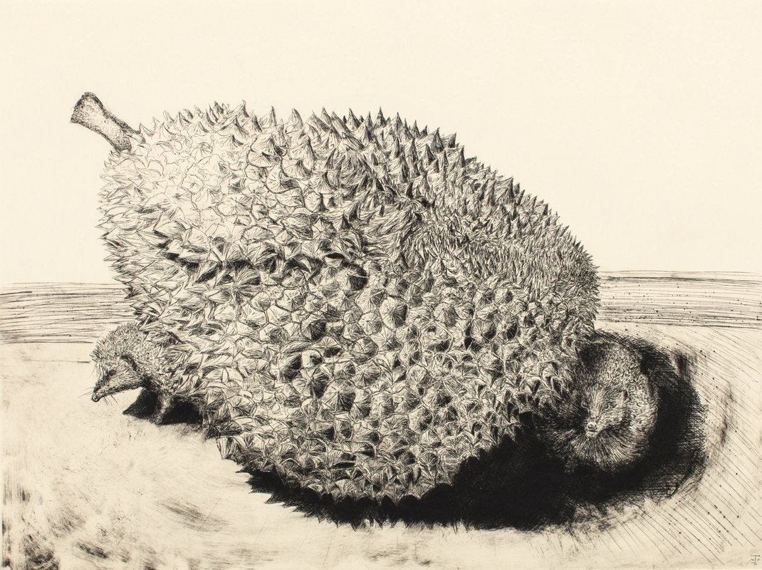 The Durian and Her Hedgehogs<span>Copyright Jack Fawdry Tatham</span>