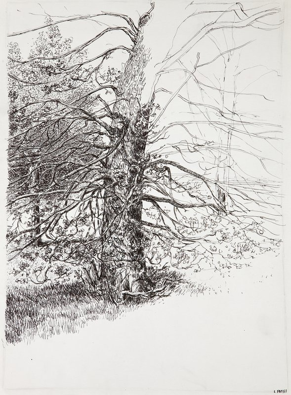 Study of a Tree, Kensington Gardens<span>Copyright Laura Footes</span>