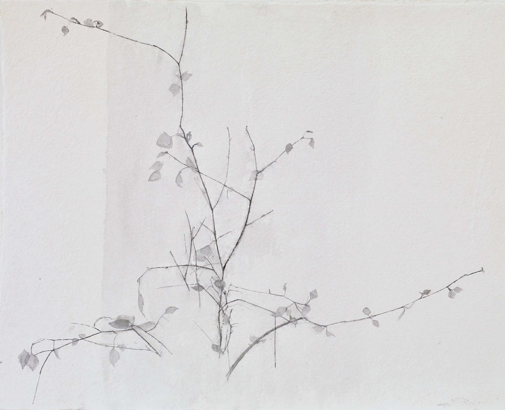 New Leaves<span>Copyright Charlotte Verity</span>