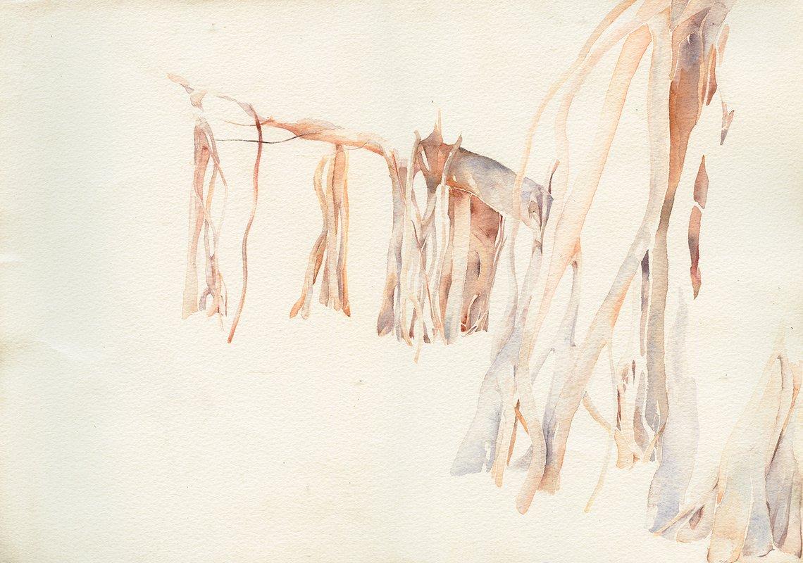 Pale Long Branch<span>Copyright Constanza Dessain</span>