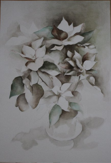 Poinsettia<span>Copyright Tara Versey</span>