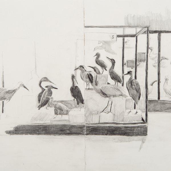 Horniman's Bird