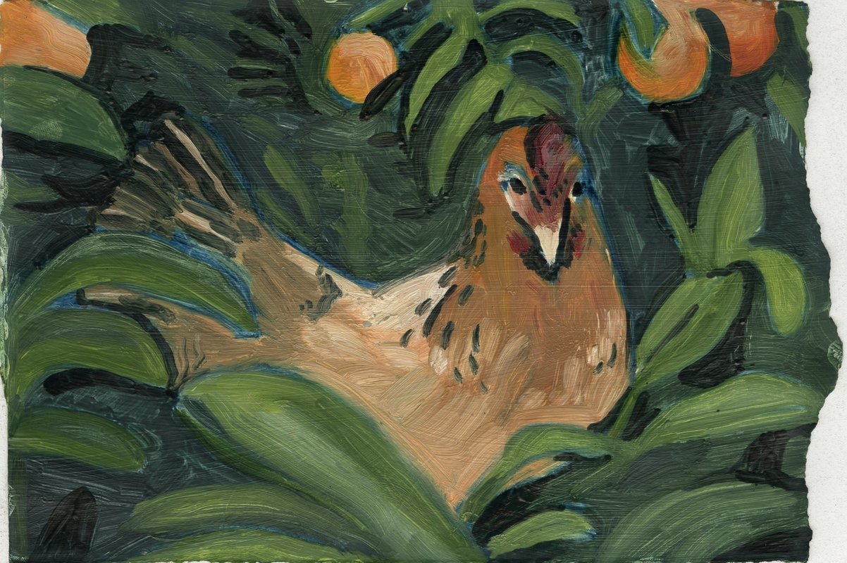 Sitting Hen<span>Copyright Becca May Collins</span>