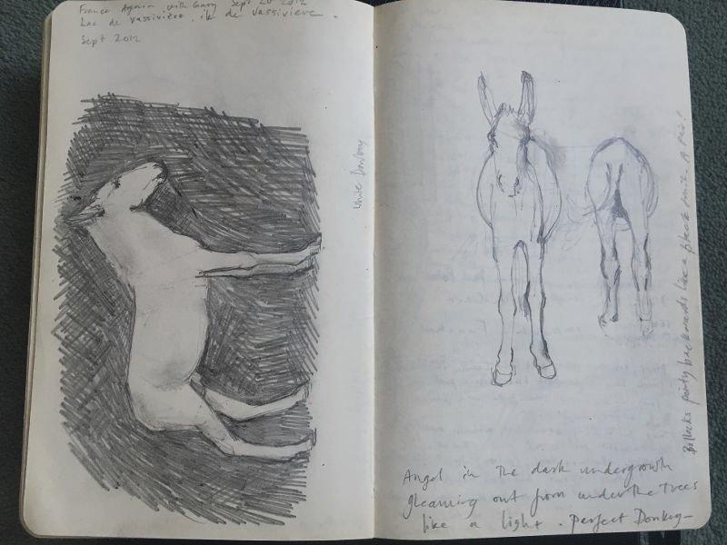 Donkey drawing<span>Copyright Dido Crosby</span>