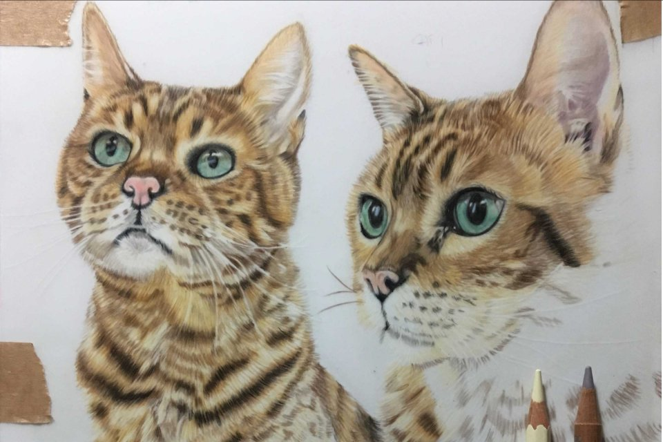 Tilly & Blue Pet Portraits