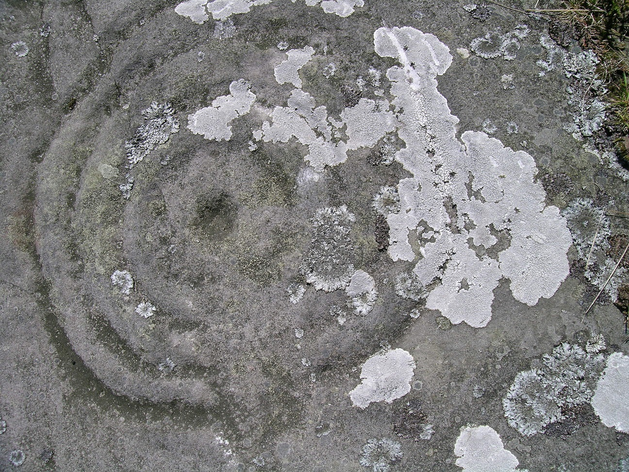 Lichen growing on carved motif