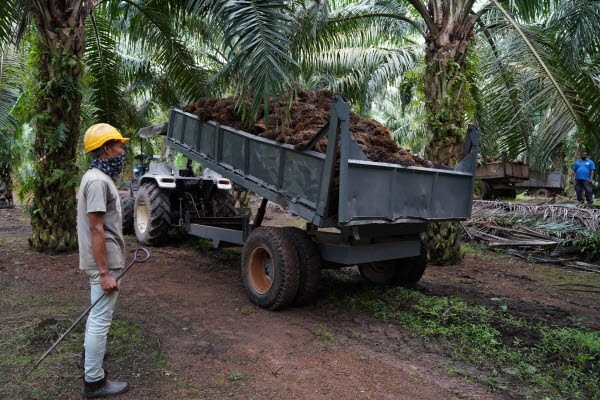 Palm 193