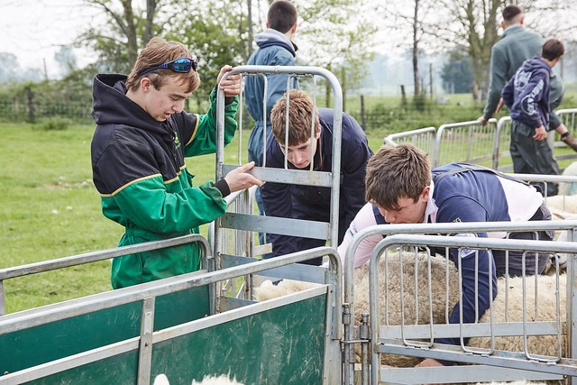 male agriculture students with sheep