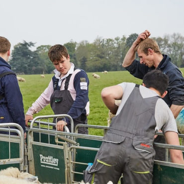 several agriculture students outside with sheep
