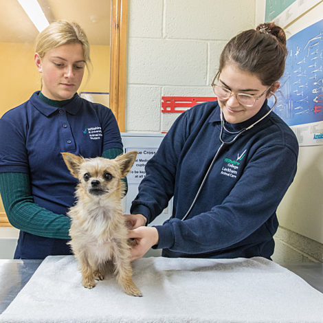 two female animal care students examining a dog