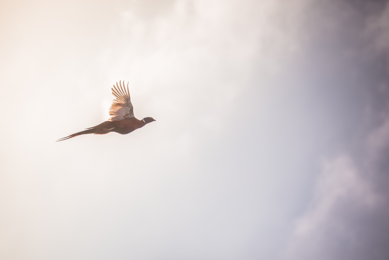 bird in the sky flying