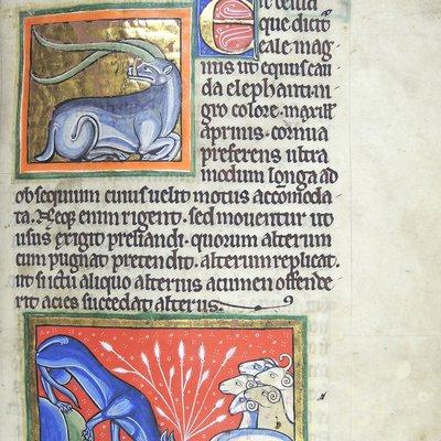 Medieval bestiary (wolf)