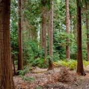 Bagley Wood 1
