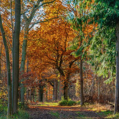 Bagley Wood 2