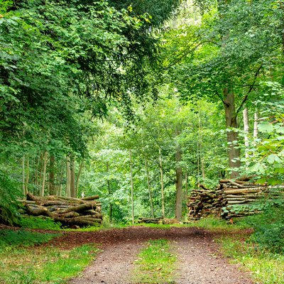 Bagley Wood 4
