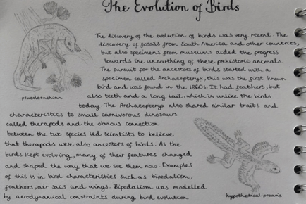 Winning entry from Year 10 pupil Lili to the 'Evolution of flight' competition of the Inspire Programme for Years 10 & 11