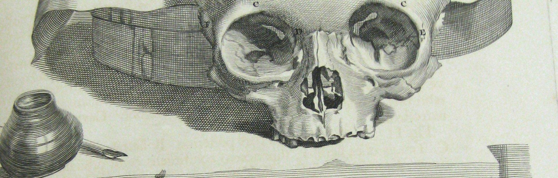 Skull from Cowper's Anatomy