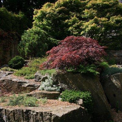 garden and rockery