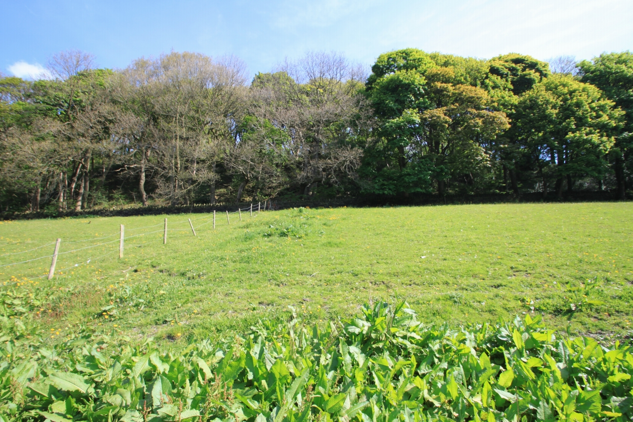 Land For Sale - Photograph 9