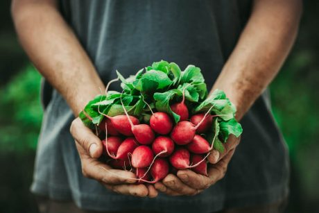 Certificate in Food Gardening Level 3