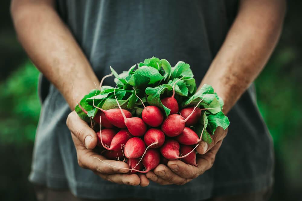 Certificate in Food Gardening Level 3