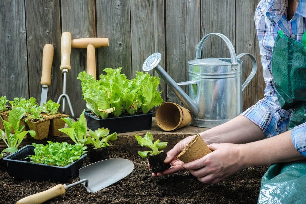 Certificate in Mastering Container Gardening Level 3