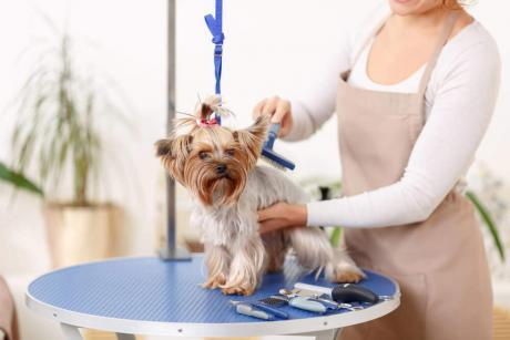 Advanced Diploma in Dog Grooming Techniques at QLS Level 3
