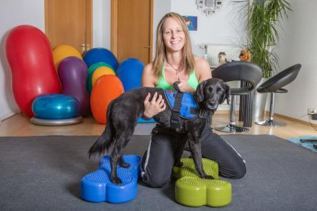Advanced Diploma in Pet Physical Therapy at QLS Level 3