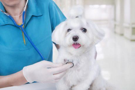 Certificate in Animal Welfare - Level 3