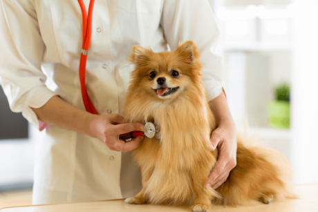 Certificate in Animal Health Care at QLS Level 3
