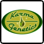 Karma Genetics Cannabis Seeds