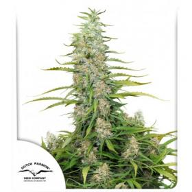 C-Vibez Feminised Seeds