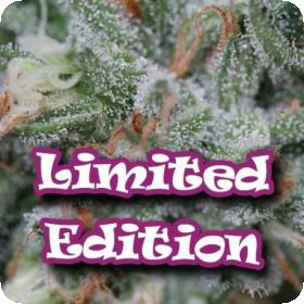 Diesel Cookie Feminised Seeds