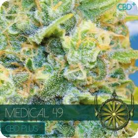 Medical 49 CBD+ Feminised Seeds