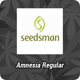 Amnesia Regular Seeds