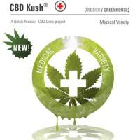 Kush CBD Feminised Seeds